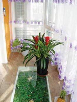 巧用植物来装饰 让盛夏阳台华丽转身(图)