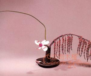 书房插花DIY