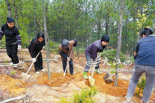 江西:植树造林绿化家园(图)-园艺快报-中国园林网