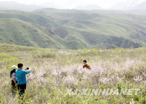 新疆:塔城裕民县花引八方游客