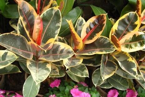 壁纸 花 盆景 盆栽 植物 桌面 464_310